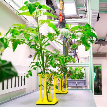 Возможно ли вырастить овощи в Антарктиде?