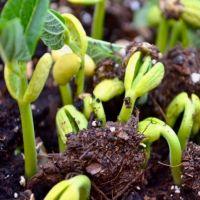 Органическое удобрение