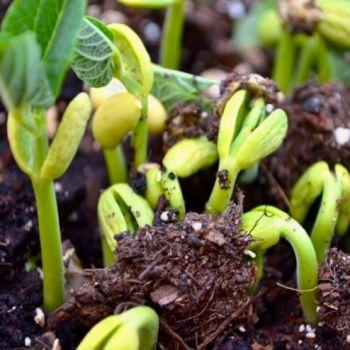 Органическое удобрение Вермисол