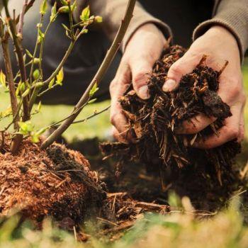 Какая мульча лучше - агроткань, агроволокно, пленка или органика?