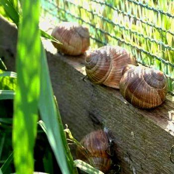 На Вінниччині відкрили ферму для вирощування їстівних равликів